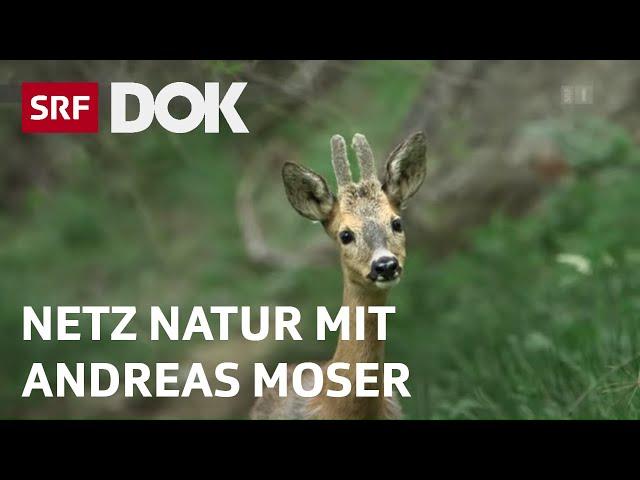 Magische Momente aus 30 Jahren NETZ NATUR mit Andreas Moser | Doku | SRF DOK