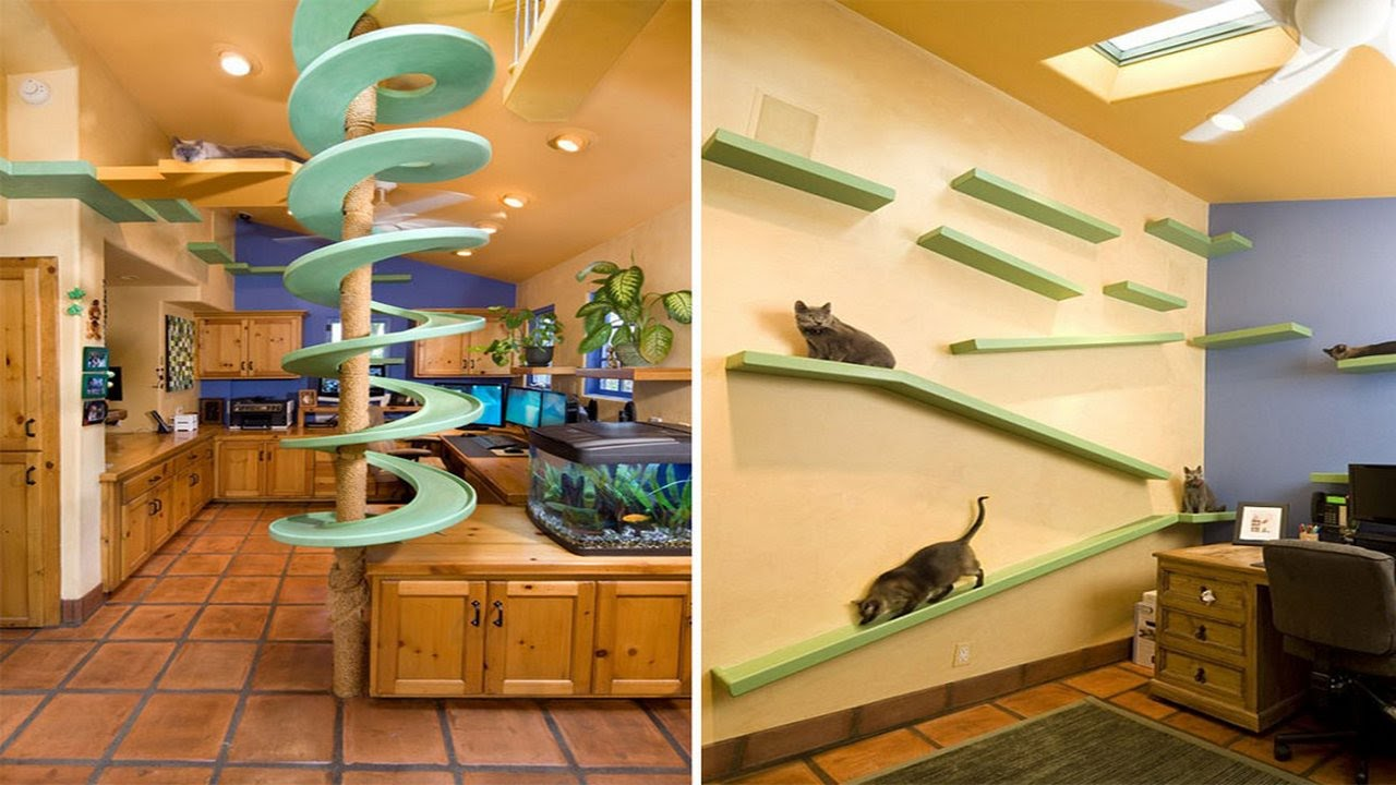 cat room design ideas