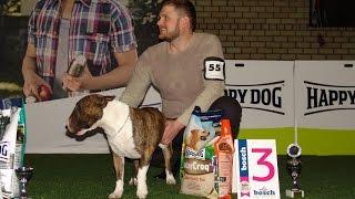 BEST IN SHOW - 2 группа пород (средние собаки). Чемпионат Германии. Выставка «Планета собак 2017»