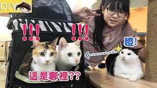 【貓日常】貓咪回娘家會是什麼反應呢?豪華寵物推車開箱[NyoNyoTV妞妞TV玩具] 日常 検索動画 44