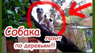 Собака лазит по деревьям. Дружит с кошками.