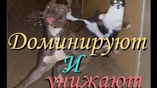Боевые котята #2