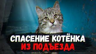 Спасение котенка: 3 дня на спасение, или его... / SANI vlog