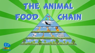 The Animal Food Chain | Educational Video for Kids