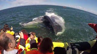 ВОТ, ЧТО ПРОИСХОДИТ, КОГДА ЕСТ КИТ. Этот огромный кит шокировал всех когда проглотили мужчину