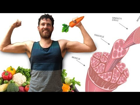Gaining Muscle and Weight as a Vegan | Hardgainer +20 lbs