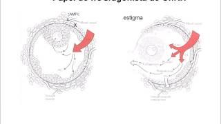 """Fertilização """"in vitro"""" (FIV) passo-a-passo - Dr. Vinicius Medina Lopes"""