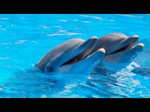 Vamos delfines