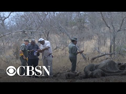 How human conflict impacts wildlife