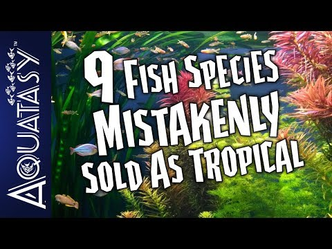 Aquatasy Countdown - 9 Fish Species Mistakenly Sold As Tropical