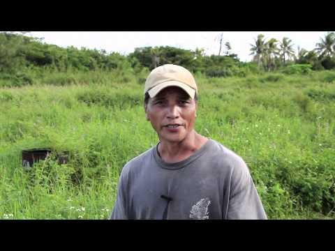 Island Farmer Spotlight: Gus Maratita