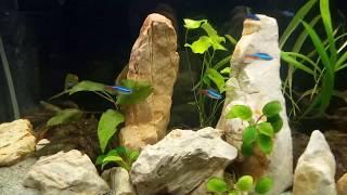 Камни в аквариуме. Песчаник. Аквариумистика. /Stones in the aquarium/Piedras en el acuario/