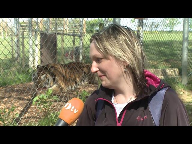 Tygra byste živit nechtěli
