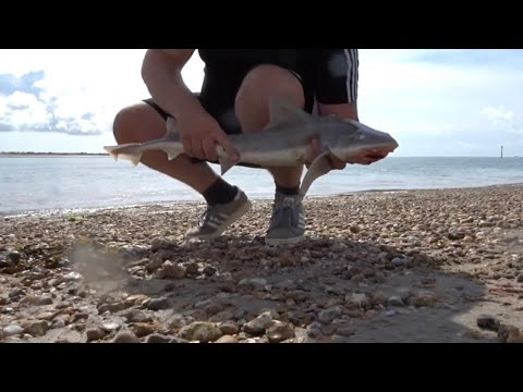 Smoothound, Bass & Dogfish Sandy Point