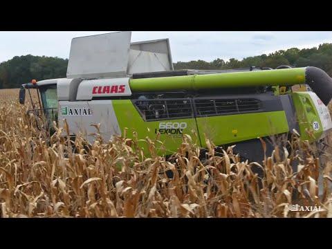 CLAAS LEXION 6600 & 7700 Kukoricában Magyarországon