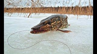 Зимняя рыбалка №5,ловля щуки по первому льду 2018