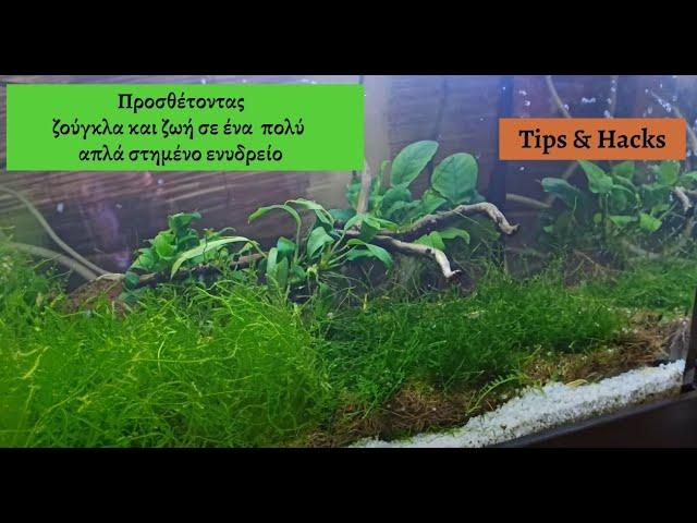 Δίνοντας ζωή με φυτά σε φτιαγμένο ενυδρείο *ακόμα και ψευδοcarpenting*  | Planters ep 5