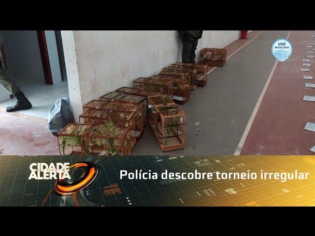 Polícia descobre torneio irregular de canto de aves silvestres