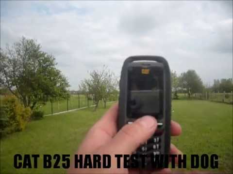 CAT B25 hard test with DOG (CAT B25 vs DOG)