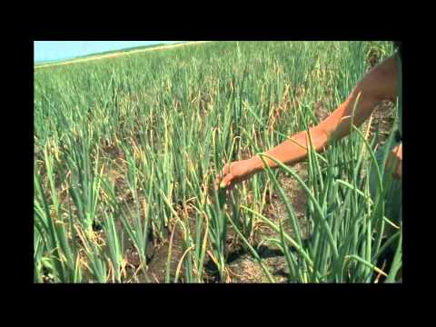 Orange County famers report crop damage amid heat
