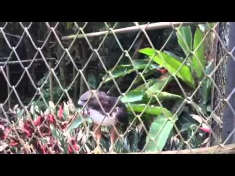 Zoo San José Costa Rica - Zoológico Simón Bolívar