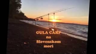 Gula Carp na Slovenskom mori