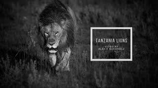 Lions Tanzania 2020 by Alex F Buchholz