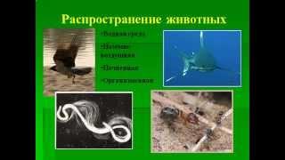 Зоология- наука о животных.AVI