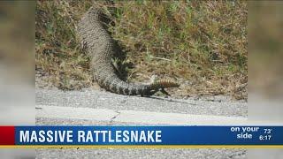 Polk couple encounters 9-foot-long rattlesnake while bird watching