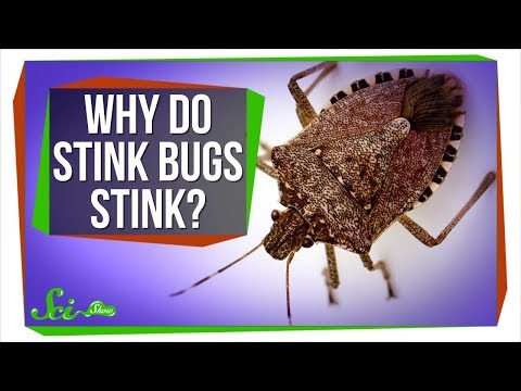 Why Do Stink Bugs Stink?