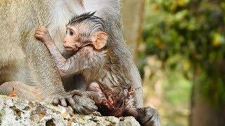 Million pity full , Janet very painful / Monkey post