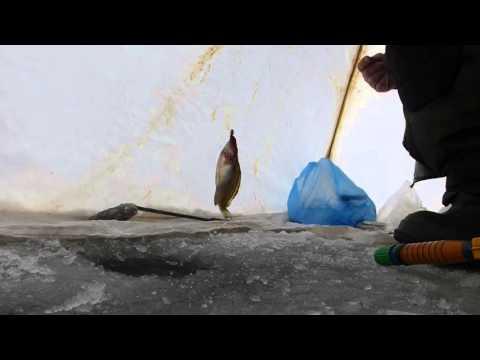 форум рыбаков белгородской области апрель 2017г