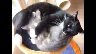 2 Kittens Sleeping Together