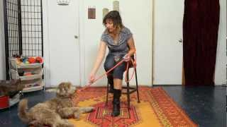 How To Charge The Clicker - Dog Training