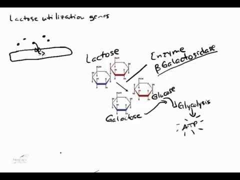 Transcriptional Regulation in Prokaryotes and Eukaryotes