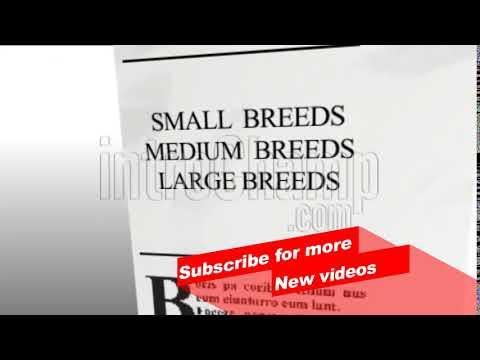 intro dog breeds