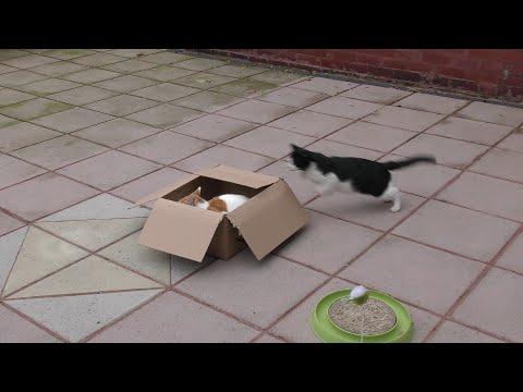 Cat Sneak Attack : 4K Ultra Hd 2160p