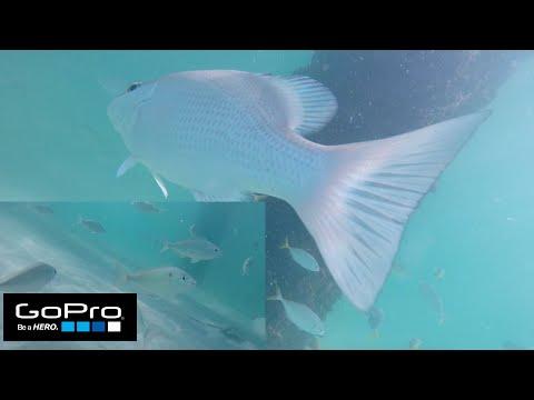 Pensacola Fishing Pier GoPro Underwater Footage