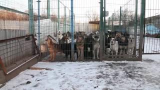 """Док. фильм """"Каждая собака"""", анонс"""