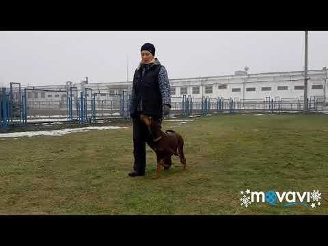 Obedience. Gatmata vom Grenzturm, 18 months