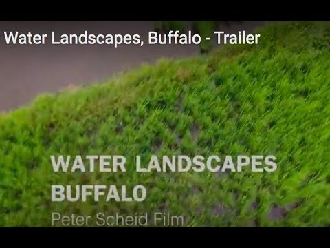 Paddy fields, Water Buffaloes - Trailer 5. - Documentary Water Landscapes