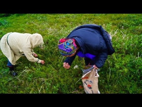 Willow: Iñupiat Traditions