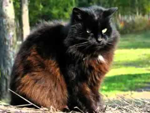 Клип Жанна Агузарова - Черный кот