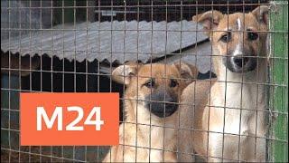 В Подмосковье устроили концлагерь в приюте для собак - Москва 24
