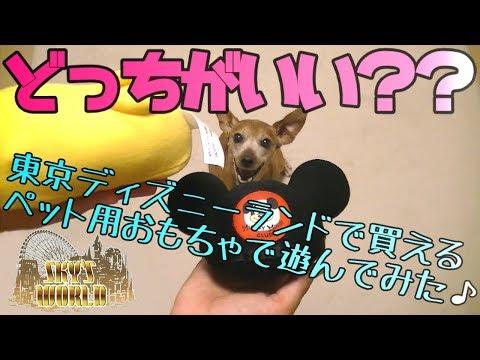 【どっちを選ぶ?♪】ºoº愛犬にディズニーランドみやげをプレゼントした結果♪ºoº東京ディズニーリゾート35周年/東京ディズニーランド/ペット用品/おもちゃ