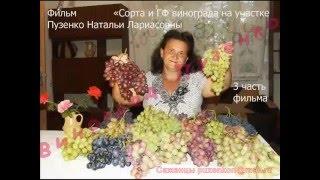 3 часть фильма ''Сорта и ГФ винограда на участке Пузенко Натальи Лариасовны''
