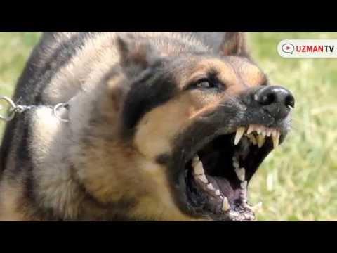 Yavru Köpeklerin Isırma Nedenleri