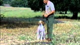 CAZA MENOR Adiestramiento de perros de caza