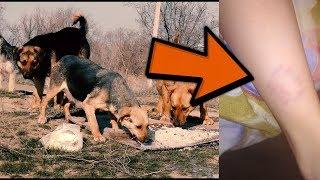 предисловие/укус собаки
