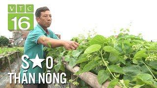 Nông dân vay tiền, thuê đất trồng hoa thiên lý | VTC16